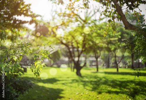 Foto op Aluminium Tuin defocused bokeh background of garden trees in sunny day