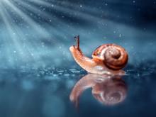 Cute Little Snails On The Mushroom. A Closeup. Beautiful Background.