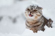 Сat Catches Snowflakes With H...