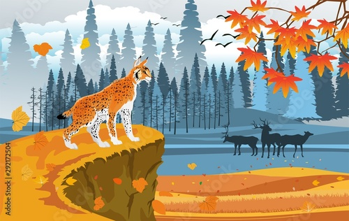landscapes of wildlife in autumn. Lynx in wildlife scene, with field, grass, forests, and leaves falling from trees