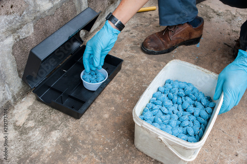 Cuadros en Lienzo  Get rid of rat using  bait poison box, pest control in industry.