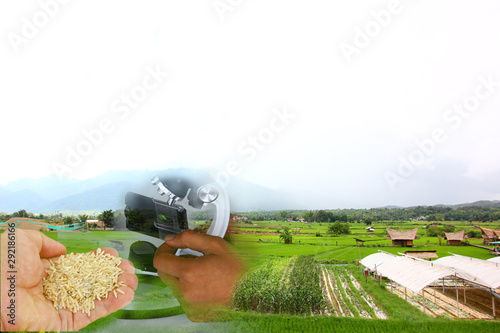 Photo sur Toile Vin raw rice in hand with microscope with organic farmland.