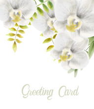 Watercolor White Orchid Flower...