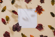 Leinwanddruck Bild Autumn or fall scene background with leaves and shadows. Minimal nature seasonal conccept. Flat lay composition.