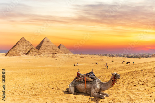 Recess Fitting Beige Colors of sunset near the Pyramids of Giza and a camel, Egypt