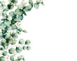 Leinwanddruck Bild - Watercolor card with eucalyptus bouquet. Hand painted eucalyptus branches and leaves isolated on white background. Floral illustration for design, print, fabric or background.