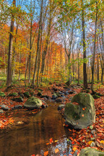 Water Stream Among The Rock In Forest. Beautiful Nature Scenery On A Sunny Autumn Afternoon. Crystal Clear Brook With Some Floating Leaves. Trees In Colorful Fall Foliage. Mossy Boulders On The Shore