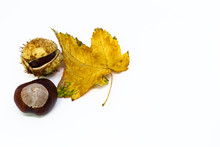 Chestnuts In The Shell And A Yellow Leaf Isolated On White Background