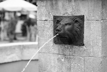 Lion Head Fountain In Centre Of Lvov