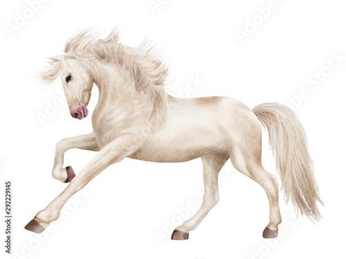 cheval, blanc, animal, étalon, isolé, noir, galop, amoureux des chevaux, arabe, Wallpaper Mural