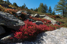 Autumn In The Swiss Mountains,...