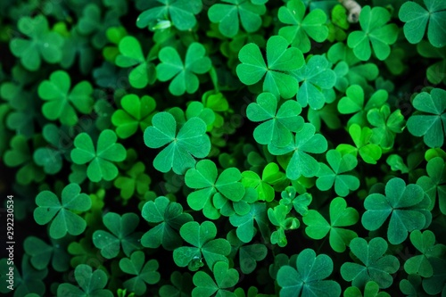 Clover Leaves for Green background with three-leaved shamrocks Poster Mural XXL