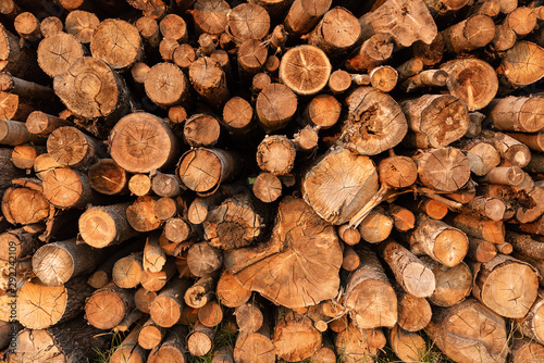 Tuinposter Brandhout textuur Timber storage area where large amount of wood is stored.