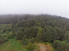 Forest Near The Ocean And Mountains With Fog. View From Above