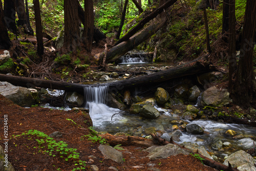 Garden Poster Forest river waterfall in the redwoods