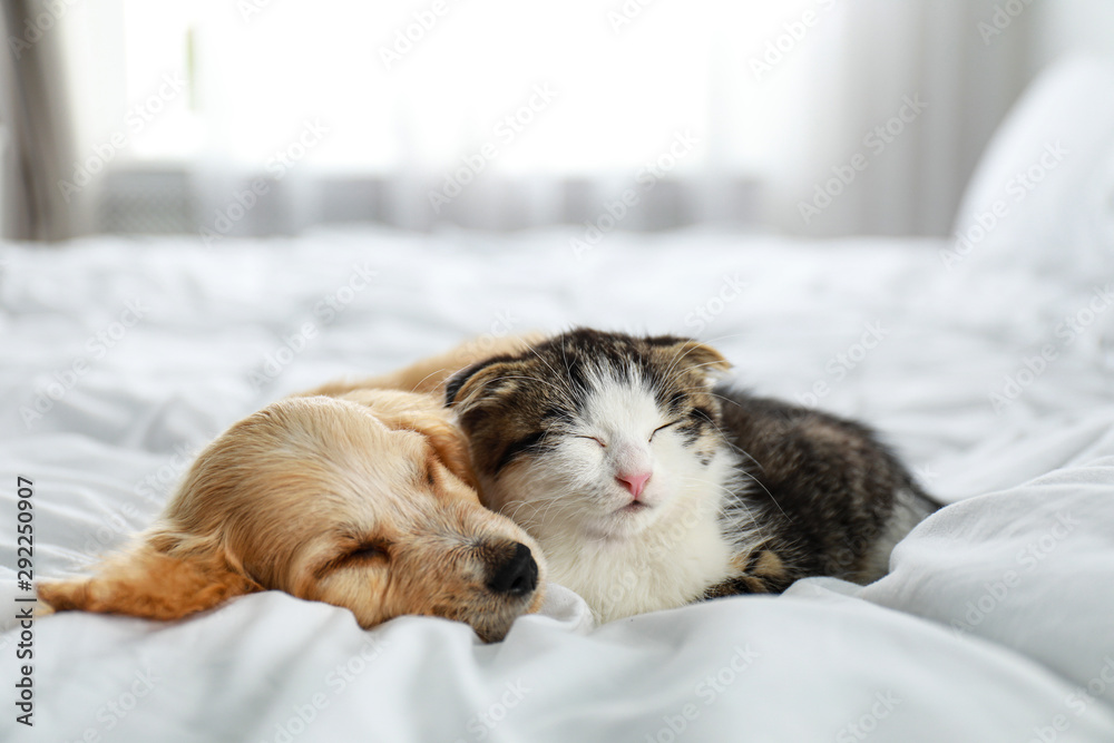 Fototapety, obrazy: Adorable little kitten and puppy sleeping on bed indoors