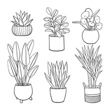 Set Of Different Hand Drawn Houseplants In Planters. Vector Outline Illustration Drawings On A White Background.
