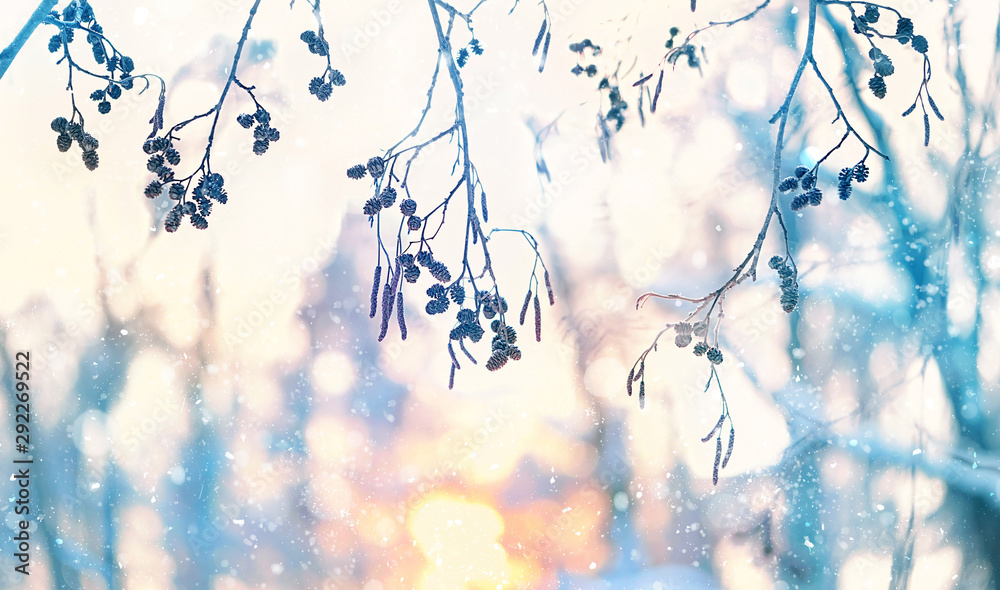 Fototapeta abstract winter background with branches in snow. beautiful winter scene. blurred winter landscape background for design. copy space, soft selective focus
