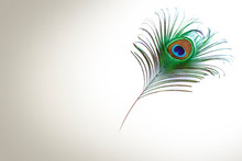 Peacock Feather On White Backg...