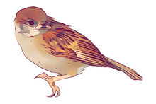 Bird Hand Drawn Isolated Illus...