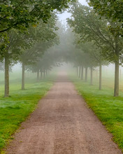 Foggy Morning Country Tree Lin...