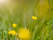 Small Yellow Flower Meadow Bac...