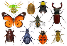Set Of Insects Isolated On A W...