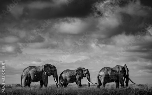 Stickers pour portes Elephant Big elephants