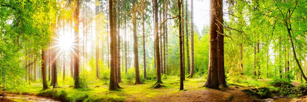 Fototapety, obrazy: Wald Panorama mit heller Sonne, die durch die Bäume scheint