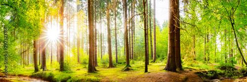 Wald Panorama mit heller Sonne, die durch die Bäume scheint Canvas Print