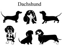 Dachshund Set. Collection Of P...