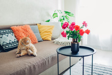 Interior Of Living Room Decorated With Flowers On Coffee Table And Cat Lying On Couch With Cushions. Fresh Roses