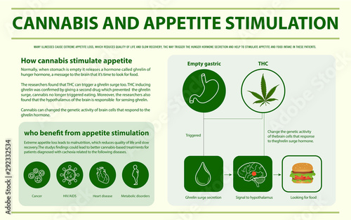 Tela Cannabis and Appetite Stimulation horizontal infographic illustration about cannabis as herbal alternative medicine and chemical therapy, healthcare and medical science vector
