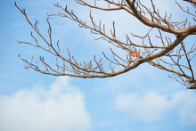 Branch Of Tree And The Only Red Leaf With Blue Sky