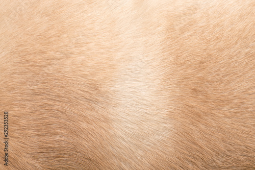 plakat Dog hair. Background for themes on dog problems with hair, animal health.