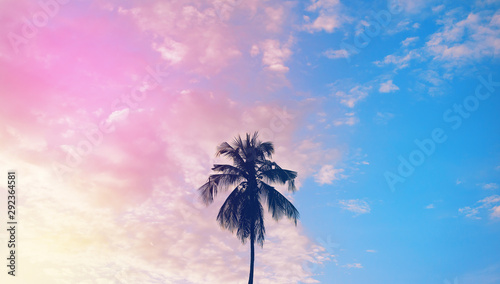 Foto auf AluDibond Flieder Dark silhouette of coconut palm trees against colorful sunset sky on tropical island. Vacation and exotic travel concept background.
