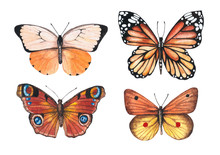 Set Of Watercolor Illustrations Depicting Bright Orange, Red, Brown Butterflies Isolated On A White Background, Hand-painted