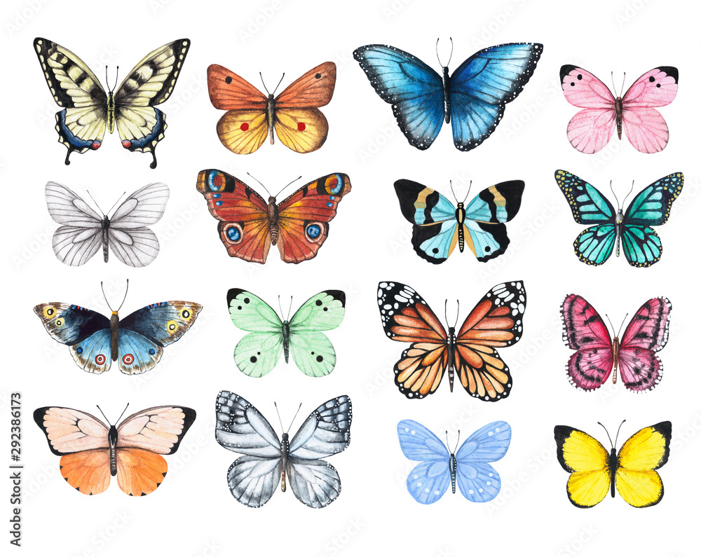 Fototapeta Set of watercolor illustrations depicting bright butterflies isolated on a white background, hand-painted