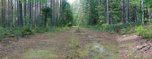 Forest Dirt Road In Summer Amo...