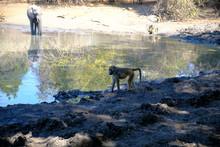Pan In Mana Pools National Park, Zimbabwe