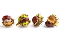 Closeup View On Four Chestnuts...