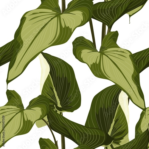 Fototapeta Tropical Spathiphyllum palm leaves, jungle leaves. Beautiful seamless floral jungle pattern on white background. obraz na płótnie