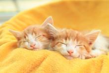 Cute Little Kittens Sleeping On Yellow Blanket