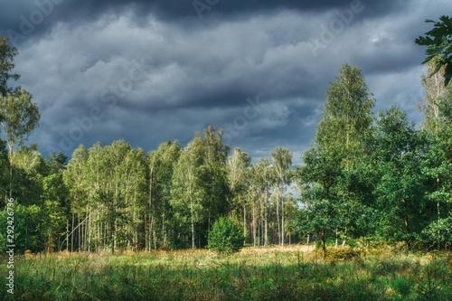 widok na polane w lesie i las mieszany, na niebie chmury zapowiadające nadchodzącą burzę, - 292426736