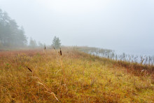 Forest Bog On A Lake In The Fog