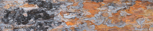 Pine tree trunk panorama. Pine bark texture. High resolution Wallpaper Mural