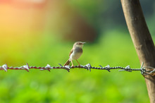 Bird Setting On Wire And Sunli...
