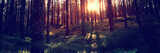 Fototapeta  - Beautiful landscape, sunset in the dense pine forest, the beauty of northern nature