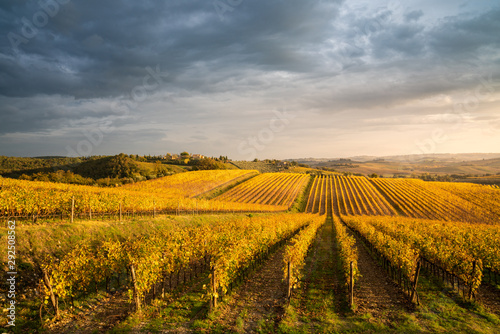 Foto auf Gartenposter Landschappen Golden vineyards in autumn at sunset, Chianti Region, Tuscany, Italy