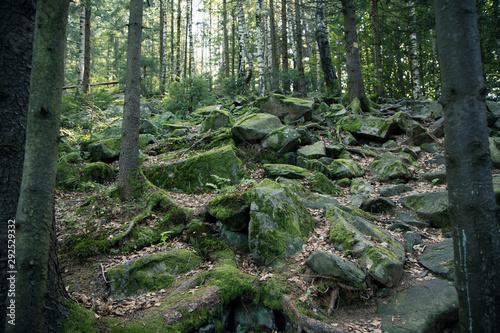 Poster Kaki north European highland rocky pine forest scenery landscape view autumn moody season time
